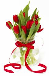 15 red tulips-210