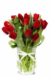 25 red tulips-221