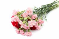 20 carnations (red and pink)-22