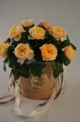 PRESENT BASKET WITH FLOWERS FB001